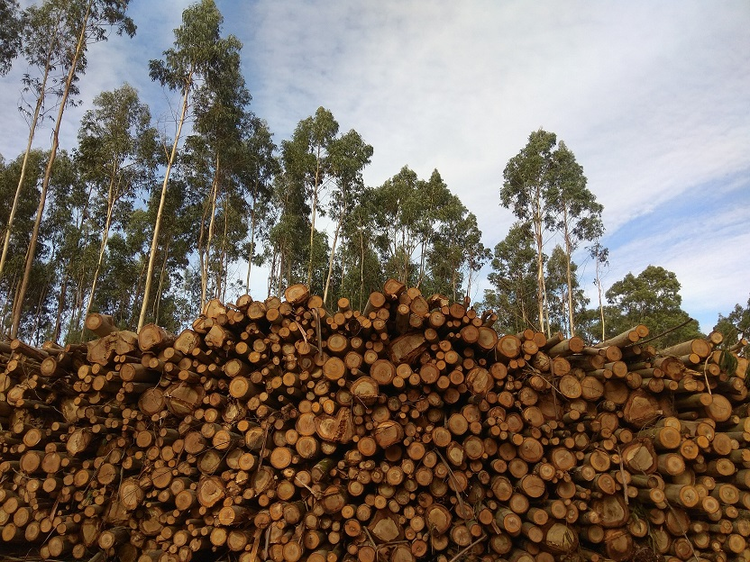De que vai o novo plan forestal galego por Benito Andrade