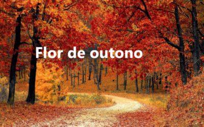 Flor de Outono por Charo Valcárcel