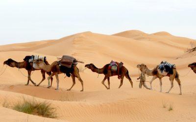 Viaxe a Túnez por Manolo Gulías