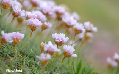 A roseira branca por Antonio Lois. – devellabella –